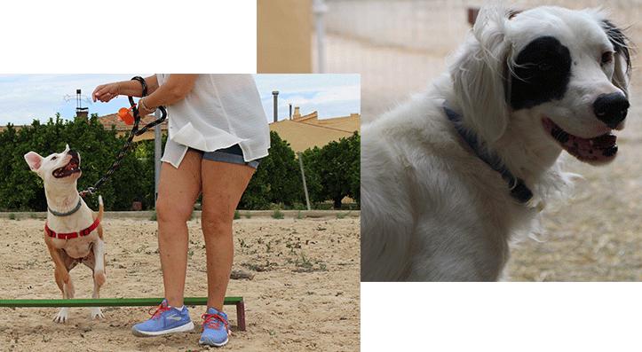 Adiestramiento canino en Guardería Canina El Pinar en Murcia