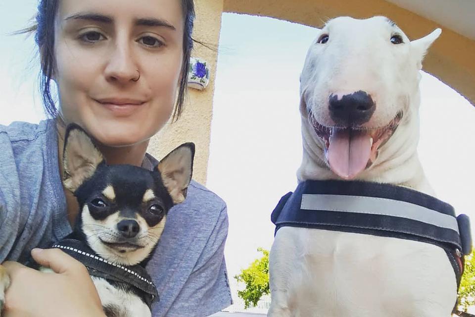 Convivencia perros grandes con pequeños en guardería canina en Murcia
