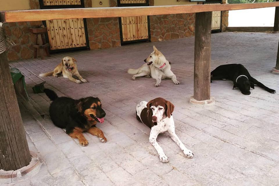 Convivencia tranquila entre perros en guardería canina en Murcia