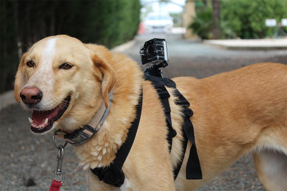 Paseo perro en guardería canina en Murcia