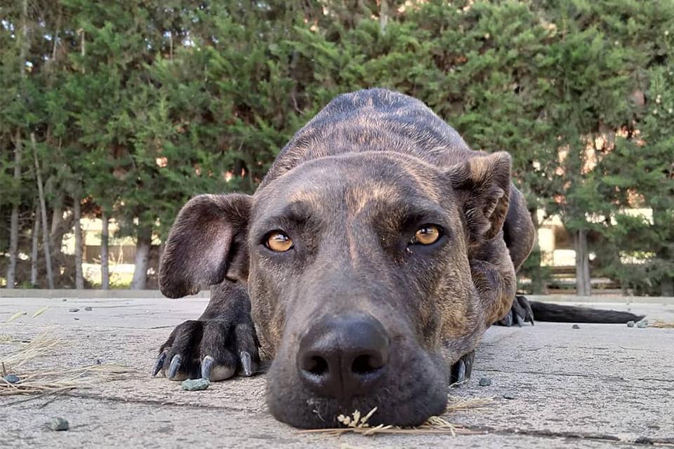 Residencia canina en Murcia sin jaulas